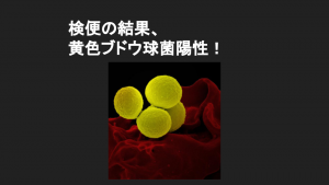 検便から黄色ブドウ球菌