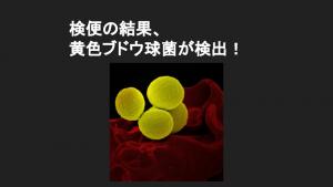 検便から黄色ブドウ球菌が